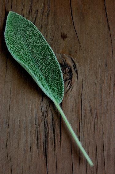 Celeriac-Mash-Herbs