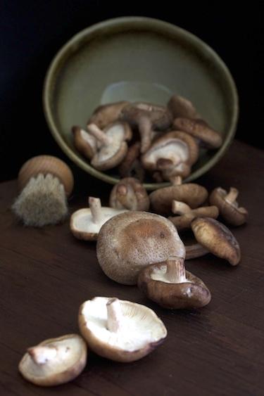 Wild-Mushroom