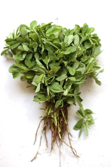 fenugreek-1